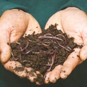Soil & Creatures